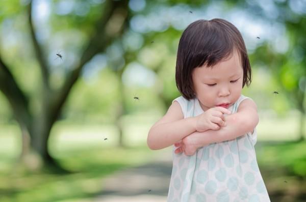 zitronengeranie wirkung gegen muecken