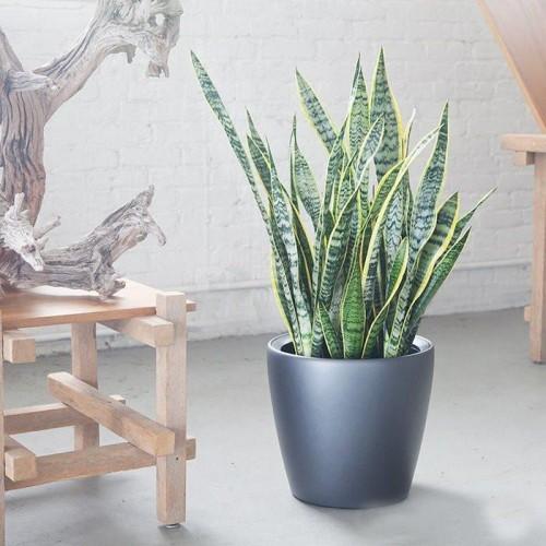 Aushaltende Zimmerpflanzen