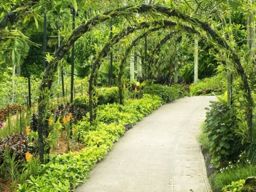 Botanischer Garten in Singapur tropische Pflanze als Bogen geformt Gartenweg
