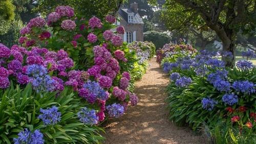 Gartenpfad mit farbenfrohen Hortensien führt zum rustikalen Haus