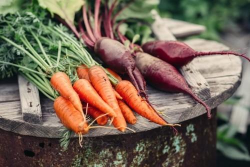 Gemüse Karotten