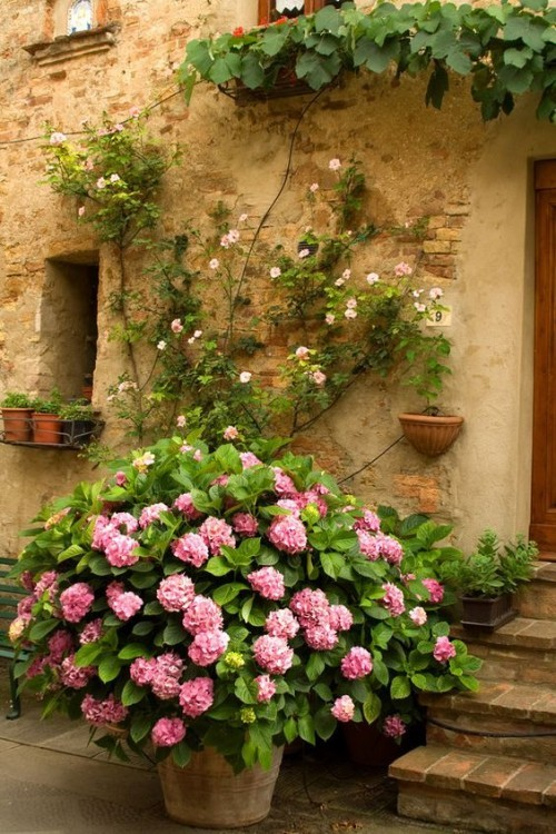 Hortensien rustikal und charmant im Garten