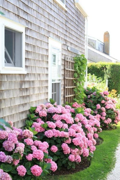 Hortensien vermehren rustikal und charmant im Garten