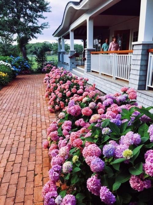 Hortensien vermehren sie bringen natürlichen Charme in den Outdoor-Bereich