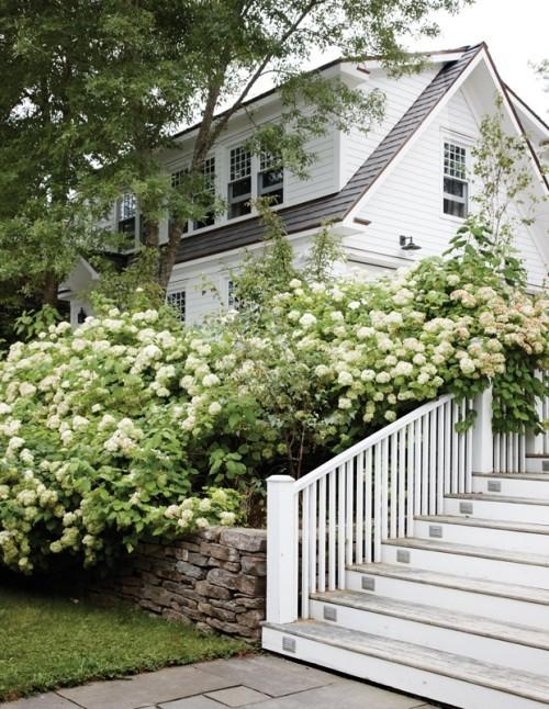 Küstenhaus weiße Hortensien im Hof sehr einladende Atmosphäre