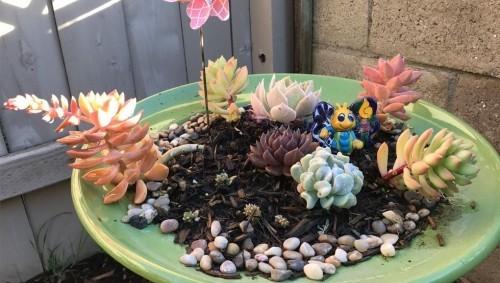 Kleinen Garten aufpeppen Sukkulenten anspruchslos