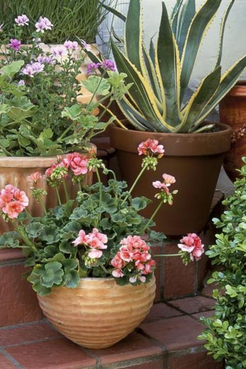 Kleinen Garten gestalten Blumentöpfe stufenweise anordnen viel Farbe haben