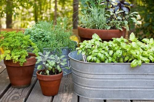 Kleinen Garten gestalten Küchenkräuter in Töpfen Kübeln pflegen