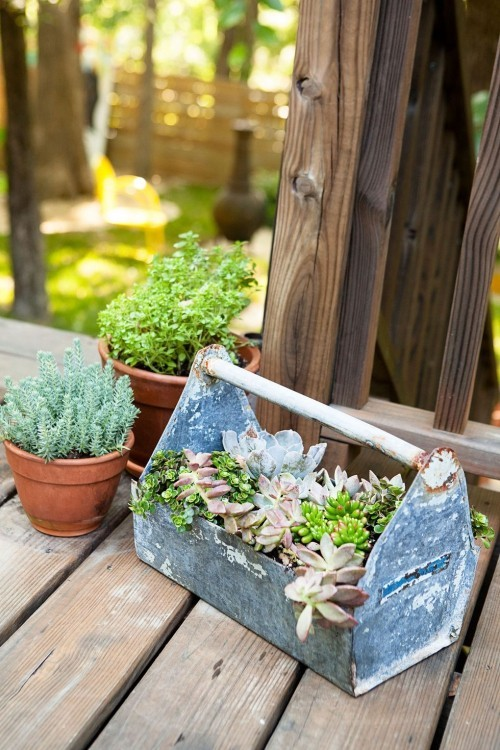 Kleinen Garten transportables Zuhause für Sukkulenten