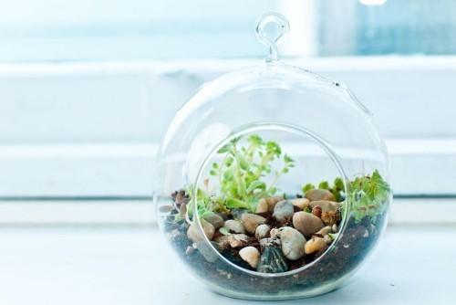 Kleines Terrarium sehr exotisch peppt den kleinen Garten auf