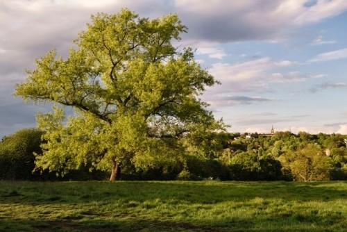Schönste Orte für Picknick weltweit Hampstead Heath London