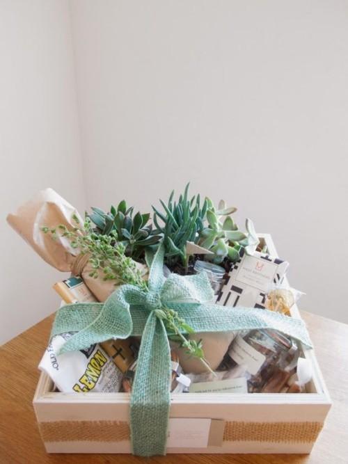 Sukkulenten andere Geburtstagsgeschenke schöne Schleife