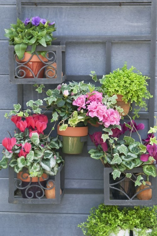 Vertikaler Garten Blumentöpfe bunte Blumen Geranien Hibiskus Hingucker