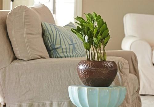 Zamioculcas ausdauernde Zimmerpflanzen glänzende grüne Blätter benötigt wenig Pflege