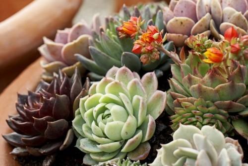 Zimmerpflanzen Sukkulenten aller Art in Holzkasten zu Hause