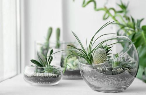 Zimmerpflanzen Sukkulenten in Glasgefäßen ein Terrarium selber machen