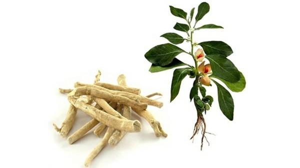 ashwagandha extrakt natürliche schlafmittel