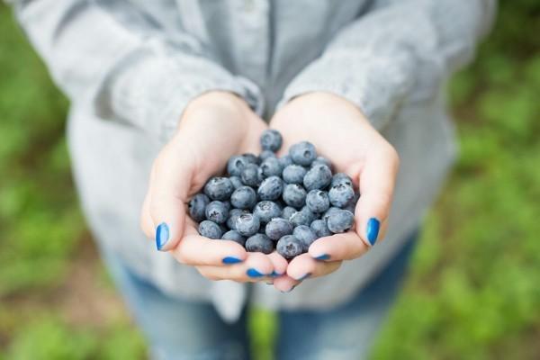 blaubeeren tolle probiotika ideen