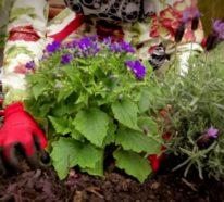 Blumenkübel bepflanzen: Kurzanleitung und beste Tipps für dauerhafte Bepflanzung