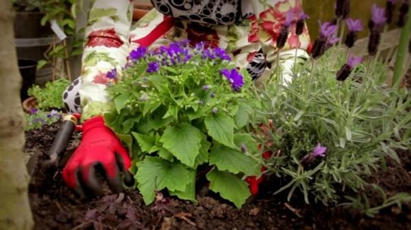 blumenkübel bepflanzen anleitung