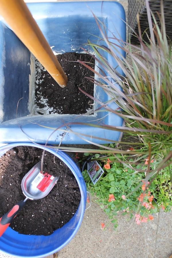 blumenkübel bepflanzen blumenerde
