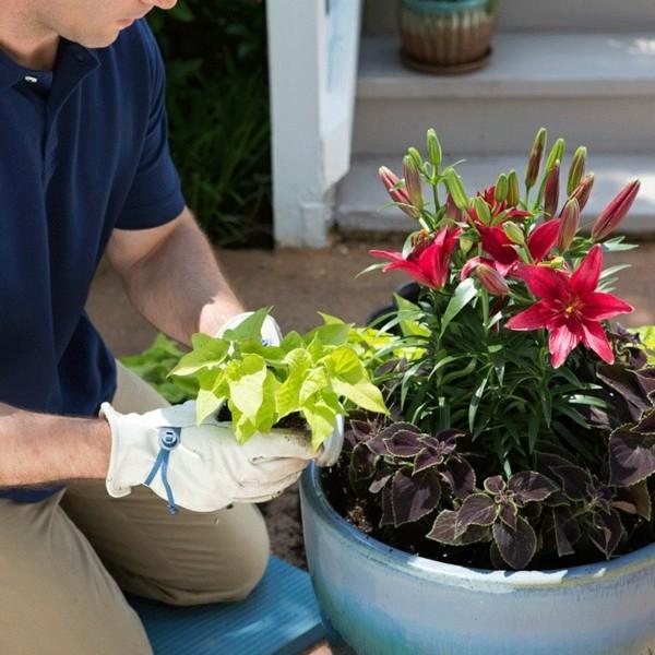 blumenkübel bepflanzen dauerhafte bepflanzung