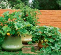 garten pflanzen ber 1000 ideen f r gartengestaltung und pflanzenanbau freshideen 1. Black Bedroom Furniture Sets. Home Design Ideas