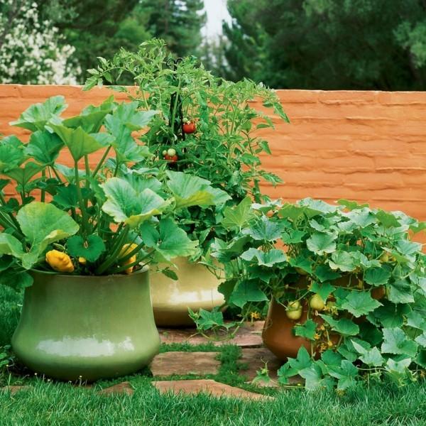 blumenkübel bepflanzen gemüse anbauen