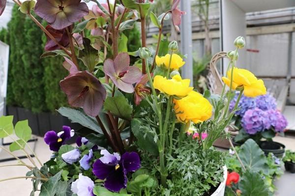 blumenkübel bepflanzen tipps und tricks