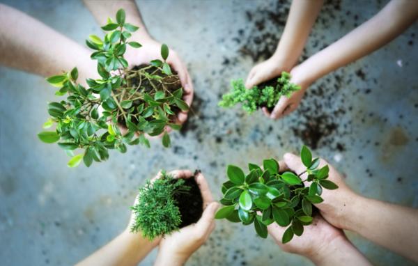 bokashi eimer grüne pflanzen
