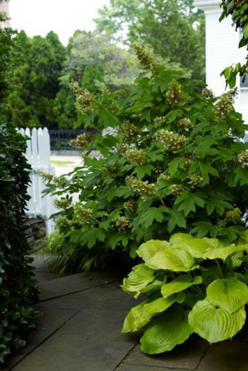 grüne Pflanzen im kleinen Garten