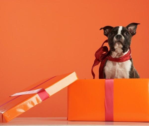 haustier hund hochzeitsgeschenk idee