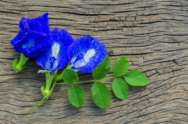 natürliche schlafmittel blaue klitorie gesund
