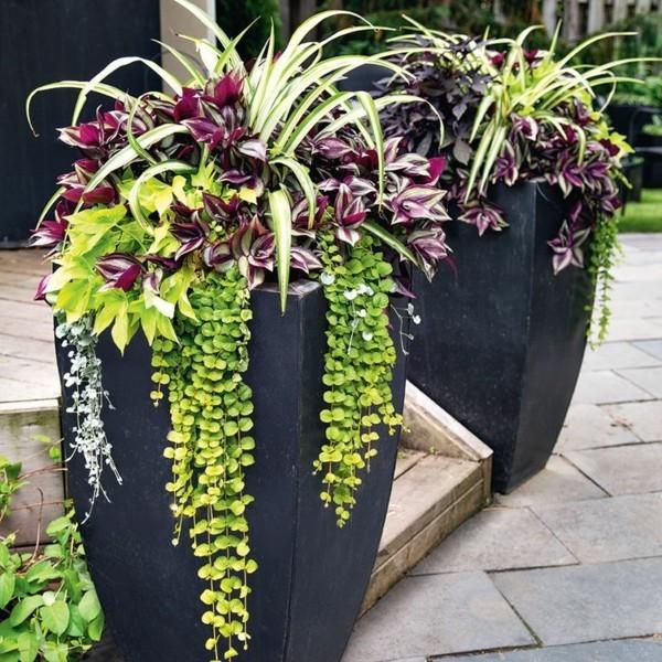 pflanzkübel modern terrassengestaltung