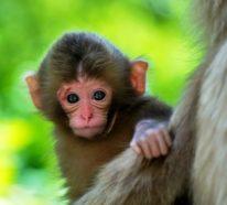 25 süße Tierbilder, die einem die Laune sofort bessern