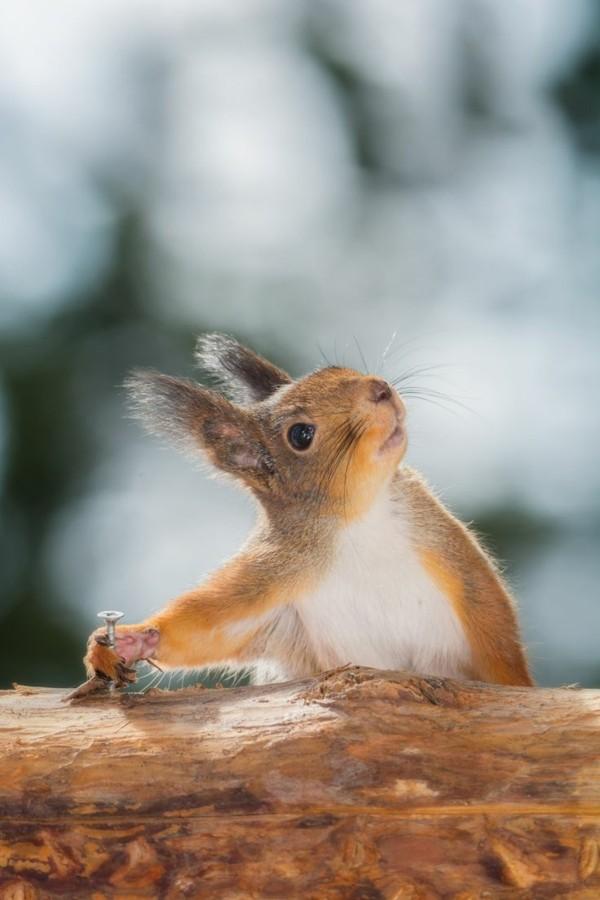 süße Tierbilder eichhörnchen
