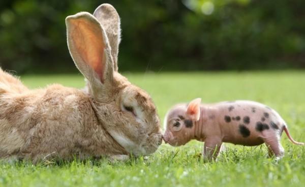 süße Tierbilder faultier