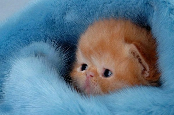 süße Tierbilder katzenbaby