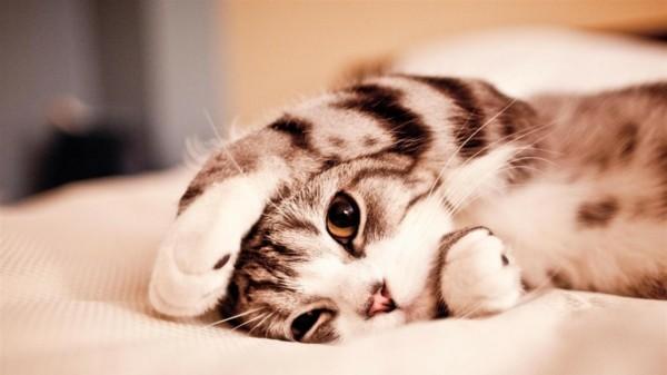 süße Tierbilder kleine katze spielt