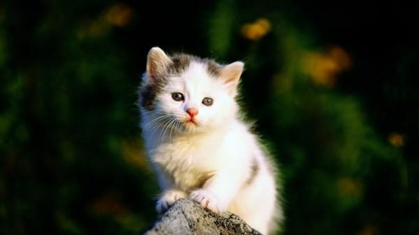 süße Tierbilder kleine katze