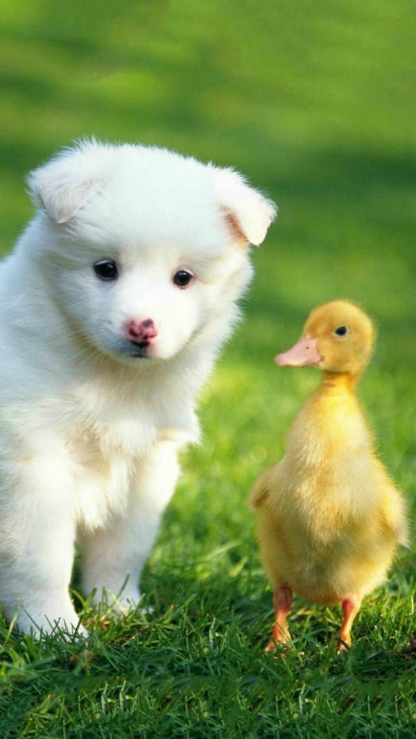 süße Tierbilder welpen und kuecken