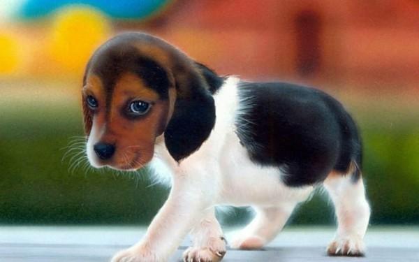 süße Tierbilder welpenhund