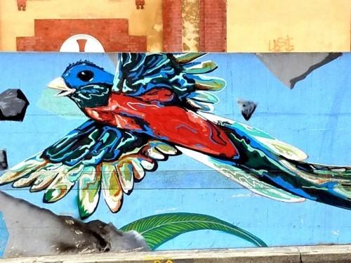 street art wand mit einem bunten vogel