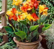 Gartenpflanzen mit buntem Blätterschmuck setzen tolle Farbakzente draußen