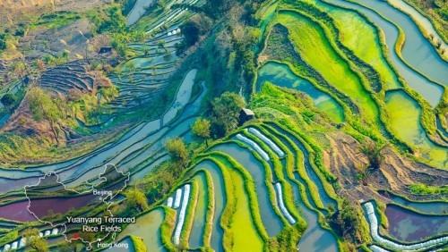 China farbenprächtige Terrassenfelder Reisfelder bestechen durch Formen und Farben