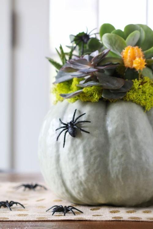 Halloween Deko Kürbis Blumentopf Sukkulenten schwarze Spinnen