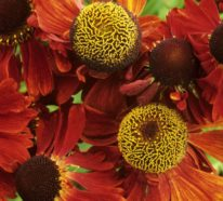 Schöne Herbstblumen bringen Ihren Garten zum Leuchten
