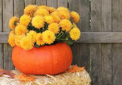 Kürbis Blumentopf ultimative Herbstdeko für drinnen und draußen