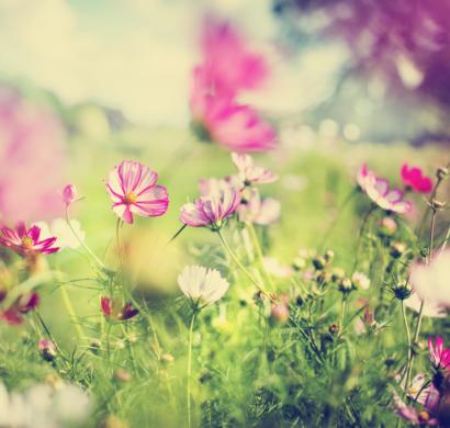 Schone Herbstblumen Bringen Ihren Garten Zum Leuchten