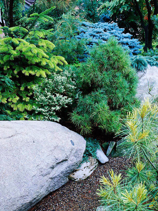 Create a rock garden - here are the tips from the pros!